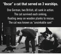 "9gag, Dank, and Oscars: ""Oscar"" a cat that served on 3 warships.  One German, two British, all sank in action  The cat survived each sinking,  floating away on wooden planks to rescue.  The cat was known as ""unsinkable sam"" 6 lives left. http://9gag.com/gag/a9WYe81?ref=fbpic"