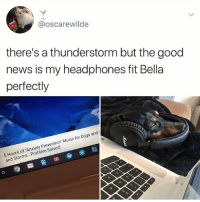 "Dogs, Music, and News: @oscarewilde  there's a thunderstorm but the good  news is my headphones fit Bella  perfectly  5 Hours of Anxiety Prevention"" Music for Dogs and  and Storms Problem Solved! I feel so sick rn"