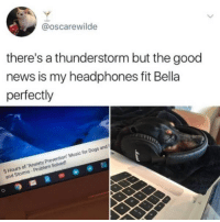 Dogs, Memes, and Music: @oscarewilde  there's a thunderstorm but the good  news is my headphones fit Bella  perfectly  prevyed  5 Hours of Anxiety Prevention Music for Dogs and  Housns-P  and Storms- Problem Solved Follow me @antisocialtv @lola_the_ladypug @x__social_butterfly__x @x__antisocial_butterfly__x
