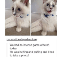 Cute, Game, and Today: oscarwildesbigadventure:  We had an intense game of fetch  today.  He was huffing and puffing and I had  to take a photo! this is soo cute and from r/me_irl
