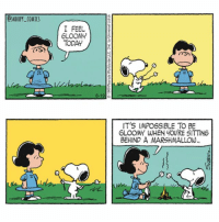 Memes, Cartoon, and Lucy: OSNOOPY_COMICS  I FEEL  GLOOM  TODAY  IT'S IMPOSSIBLE TO BE  GLOOMY WHEN YOURE SITTING  BEHIND A MARSHMALLOW Snoopy always knows just what to do comics snoopycomics cartoon snoopy lucy