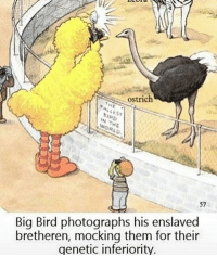 Big Bird, Big, and Ostrich: ostrich  57  Big Bird photographs his enslaved  bretheren, mocking them for their  genetic inferiority