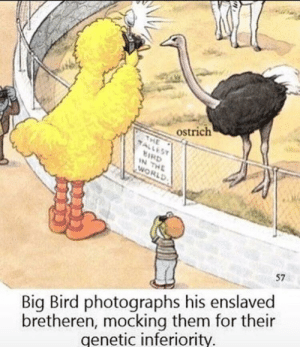 Hitler, World, and Big Bird: ostrich  ALLES  IRD  N THE  WORLD  57  bretheren, mocking them for their  genetic inferiority  Big Bird photographs his enslaved Hitler learns about eugenics [1930]