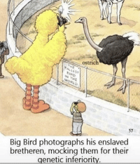 "Dank, Meme, and World: ostrich  IRD  N THE  WORLD  57  bretheren, mocking them for their  genetic inferiority  Big Bird photographs his enslaved <p>bIG BiRD shows his genetic superiority via /r/dank_meme <a href=""https://ift.tt/2Ln07SY"">https://ift.tt/2Ln07SY</a></p>"