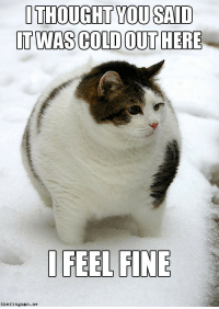 Winter Fatcat: OTHOUGHT YOU SAID  T WAS COLD OUT HERE  D FEEL FINE  thefrognan.me Winter Fatcat