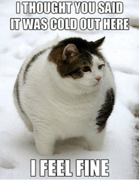 <p>As A Fat Guy I Can Relate.</p>: OTHOUGHT YOU SAID  T WAS COLD OUT HERE  FEEL FINE <p>As A Fat Guy I Can Relate.</p>