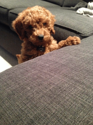 baby-wild-animals:  In Honor of National Puppy Day: Otis when he was 12 weeks old: OTIS baby-wild-animals:  In Honor of National Puppy Day: Otis when he was 12 weeks old