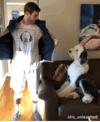 9gag, Love, and Memes: otis unleashed I'm your biggest fan I'll follow you until you love me, pupper, pupperazi - 📸@otis_unleashed - sheepadoodle 9gag