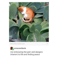 Memes, 🤖, and Inherent: Otrevy skies tumblr com  eroscestlavie  me embracing the pain and dangers  inherent to life and finding peace me rn - Max textpost textposts