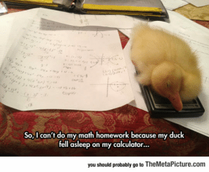 awesomesthesia:  Perfect Excuse For Not Doing Your Math Homework: otrux24  Cay (  e (s,9  Clipio  2  So,I can't do my math homework because my duck  fell asleep on my calculator...  you should probably go to TheMetaPicture.com awesomesthesia:  Perfect Excuse For Not Doing Your Math Homework