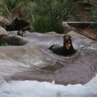 Love, Otters, and Water: Otters Love Water Slide!