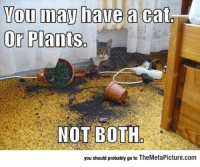 Tumblr, Blog, and Cat: ou may haue a cat  Or Plants.  NOT BOTH  you should probably go to TheMetaPicture.com epicjohndoe:  You Have To Choose