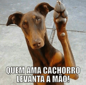 Memes, Mao, and 🤖: OUEM AMA CACHORRO  LEVANTA A MAO