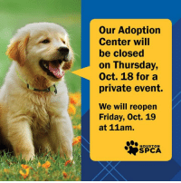 Friday, Memes, and Thank You: Our Adoption  Center will  be closed  on Thursday,  Oct. 18 for a  private event.  We will reopen  Friday, Oct. 19  at 11am.  HOUSTON Our Adoption Center will be closed THIS Thursday, October 18th for a private event. We will be back to normal business hours on Friday, October 19th from 11am - 7pm. Thank you so much for understanding!