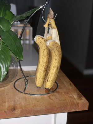 Our bananas committed suicide overnight: Our bananas committed suicide overnight