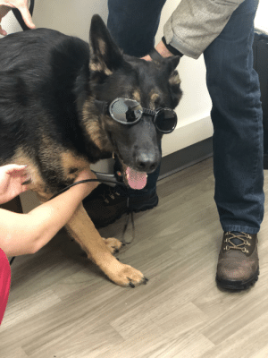 Our boy had to get laser treatments today in these super fly goggles: Our boy had to get laser treatments today in these super fly goggles