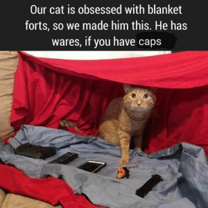 A little skyrim / fallout humor 😉🐱: Our cat is obsessed with blanket  forts, so we made him this. He has  wares, if you have caps A little skyrim / fallout humor 😉🐱