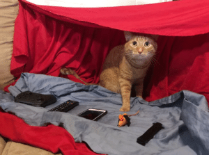 Our cat is obsessed with blanket forts, so we made him this. He has wares, if you have coin.: Our cat is obsessed with blanket forts, so we made him this. He has wares, if you have coin.