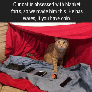 blanket forts: Our cat is obsessed with blanket  forts, so we made him this. He has  wares, if you have coin