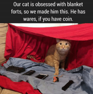 Sun Gazing: Our cat is obsessed with blanket  forts, so we made him this. He has  wares, if you have coin Sun Gazing