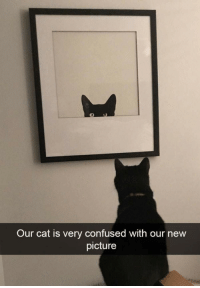 Confused, How To, and How: Our cat is very confused with our new  picture How to mess with your cat