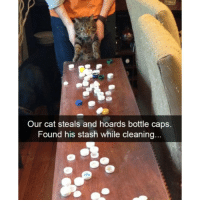 Whats your plan kitty? (@hilarious.ted): Our cat steals and hoards bottle caps.  Found his stash while cleaning Whats your plan kitty? (@hilarious.ted)