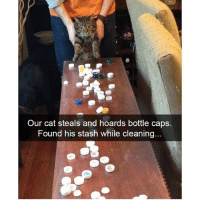 Follow @hilarious.ted for the best animal memes!!: Our cat steals and hoards bottle caps.  Found his stash while cleaning... Follow @hilarious.ted for the best animal memes!!