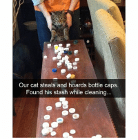 Funny, Cat, and Stash: Our cat steals and hoards bottle caps.  Found his stash while cleaning @petroom