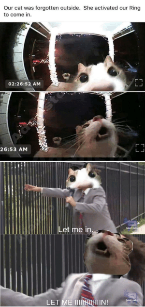 Cats are evolving by adausto MORE MEMES: Our cat was forgotten outside. She activated our Ring  to come in.  02:26:52 AM  sto  26:53 AM  Let me in.  [adult swim  LET ME IIIINIIN!  [adult swim) Cats are evolving by adausto MORE MEMES