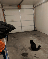 Our cat will sit by the garage door, waiting for my wife to come back every time she goes to work.: Our cat will sit by the garage door, waiting for my wife to come back every time she goes to work.