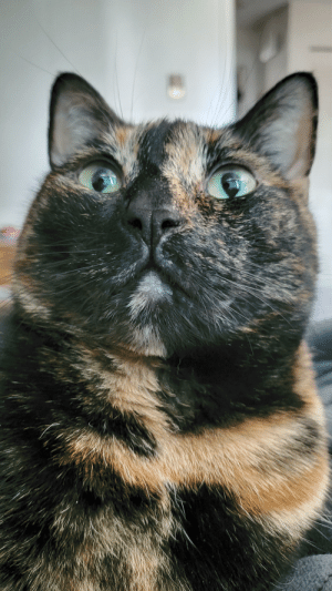 Our chonk Ava wishing everyone a happy National Pet Day: Our chonk Ava wishing everyone a happy National Pet Day