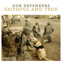 Heros Then..Heros Now: OUR DE FENDER S  FAITHFUL AND TRUE  Labradors Heros Then..Heros Now