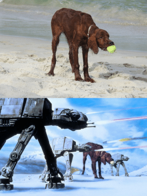 Our dog at the beach. The resemblance was uncanny: Our dog at the beach. The resemblance was uncanny