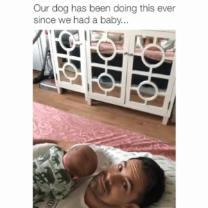 """I was here first..."" 😂 Credit: @erinstegeman: Our dog has been doing this ever  since we had a baby ""I was here first..."" 😂 Credit: @erinstegeman"