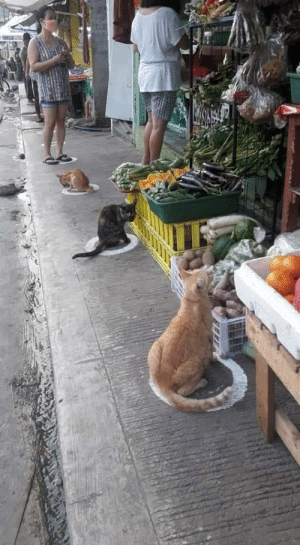 Our feline friends spotted practicing social distancing measures amid the COVID-19 pandemic: Our feline friends spotted practicing social distancing measures amid the COVID-19 pandemic