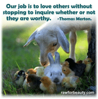 Our job is to love others without  stopping to inquire whether or not  they are worthy. -Thomas Merton.  rawforbeauty.com Our job is to love others without stopping to inquire whether or not they are worthy— http://rawforbeauty.com/