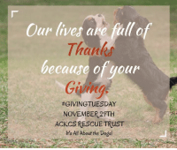 Memes, Cavaliers, and 🤖: Our lives are full o  Thanks  because of your  Going  #GIVINGTUESDAY  NOVEMBER 29TH  ACKCS RESCUE TRUST Today, we invite you to give Happiness to the Cavaliers in our care and the hundreds who will need us in the coming year. By donating $25.00 today for #GivingTuesday you help bring Happiness to Cavaliers who need it most. Please donate $25.00 today to help us help the dogs. Your giving is what keeps us going. Thank you. http://cavalierrescuetrust.org/donations-store/rescue-store/donations/25-donation-to-rescue-trust-detail
