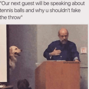 "Dog Memes Of The Day 32 Pics – Ep52 #animalmemes #dogmemes #memes #dogs - Lovely Animals World: ""Our next guest will be speaking about  tennis balls and why u shouldn't fake  the throw""  Shitheadsteve Dog Memes Of The Day 32 Pics – Ep52 #animalmemes #dogmemes #memes #dogs - Lovely Animals World"