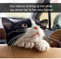 new home: Our rescue looking at me while  we drove her to her new home!