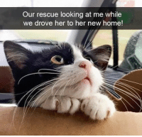 : Our rescue looking at me while  we drove her to her new home!