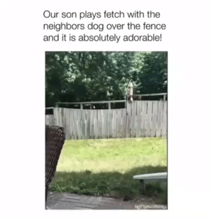 That dog is so smart🐕😍 #dogs #doglovers #puppy #puppies #animals #animallovers #lovelyanimalsworld #cute #dogvideos: Our son plays fetch with the  neighbors dog over the fence  and it is absolutely adorable!  NgthumanBcings That dog is so smart🐕😍 #dogs #doglovers #puppy #puppies #animals #animallovers #lovelyanimalsworld #cute #dogvideos