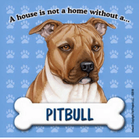 Pitbull: ouse is not a home wit  PITBULL