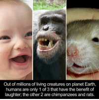 Dank, 🤖, and Creature: Out of millions of living creatures on planet Earth,  humans are only 1 of 3 that have the benefit of  laughter, the other 2 are chimpanzees and rats.