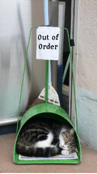 Out of  Order The ultimate dust buster
