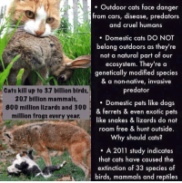 "Abc, Being Alone, and America: . Outdoor cats face danger  from cars, disease, predators  and cruel humans  Domestic cats DO NOT  belong outdoors as they're  not a natural part of our  ecosystem. They're a  genetically modified species  & a non-native, invasive  predator  Cats kill up to 3.7 billion birds  20.7 billion mammals,  800 million lizards and 300  million frogs every year.  . Domestic pets like dogs  & ferrets & even exotic pets  like snakes & lizards do not  roam free & hunt outside.  Why should cats?  A 2011 study indicates  that cats have caused the  extinction of 33 species of  birds, mammals and reptiles kaijutegu:  fantasticbeastsandhowtokeepthem:  wildlife-rehabilitator:  hotcommunist:  withgoldenfire:  hotcommunist:  findchaos:  wildlife-rehabilitator:  Some of you may have seen my reply to a post and the ask I received about outdoor cats, so here is a little infographic about outdoor cats.  Don't let your cats outside.Don't let your cats outside.Don't let your cast outside. No exceptions. Nope, I don't care if Muffles is super-special and adventurous. Nope, still don't care that it's different where you live. Please refer to the original bullet points.  (*gets ready to hit 'Block' on a thousand angry cat owners*)  this is a mess  have you gobshites genuinely never fucking heard of farm cats jesus wept, if i never see another fucking townie animal rights activist it'll be too fucking soon.  the current political system we live under doesn't give a fuck about nature. wildlife charities have had a huge downward swoop in donations due to the recession caused by the powers that be, fracking is being done on national parks and nature reserves, roads are hastily built through wildlife rich areas and adequate warning signage is not provided… but no, it's us ordinary people and our pesky outdoor cats that are the cause of…extinct….species…? really? is this the hill u want to die on OP??? get back 2 me   I'm not refuting that humans kill far more animals than cats do, but over a billion animals are killed annually in the US by outdoor cats. That's also a huge problem. I'm also aware that wildlife rescue organizations are losing donations - I'm the vice president and co-founder of a 501©(3) non-profit organization and not only do we scrape by on small donations while dozens of animals come in a month, many of which are injured by cats. We just had to euthanize a yearling squirrel because it was mauled by a cat and had full hind-end paralysis from the attack. Believe me, I understand. ""An estimated 60 to 88 million cats are owned in the US and an estimated 60 million more are feral… While loss of habitat is the primary cause of extinction, cats are responsible for the extinction of 33 species of birds worldwide. Cats kill an estimated 480 million birds per year (assuming eight birds killed per feral cat per year.)"" That is a grossly conservative number, and only accounts for feral cats, not outdoor pets. And that's just birds. Plus the other wildlife that are killed by cats annually. Here's another resource, a smaller scale research program called Kitty Cams: ""Hunting cats captured an average of 2 items during seven days of roaming. Carolina anoles (small lizards) were the most common prey species followed by Woodland Voles (small mammals). Only one of the vertebrates captured was a non-native species (a House Mouse)."" From the same group: ""44% of cats were witnessed stalking or chasing prey; 30% captured wildlife.""   An article from Mental Floss, sources listed at the bottom of the article:    ""84 million House cats in the United States 4 to 18 Birds killed by a typical house cat every year 8 to 21 Small mammals killed by a typical house cat every year 30 million to 80 million Free-roaming, feral cats estimated to be living in the United States. They either survive alone or live in colonies. In Washington, D.C., for example, there are estimated to be some 300 outdoor cat colonies. 23 to 46 Birds killed by each feral cat every year 129 to 338 Small mammals killed by each feral cat every year 1.4 billion to 3.7 billion Total birds killed by America's cats every year 15 Percentage of all bird deaths estimated to come at the hands — er, paws — of cats 6.9 billion to 20.7 billion Total small mammals killed by cats every year"" From a report on ABC News: ""Cats are responsible for the deaths of 1.4 to 3.7 billion birds and 6.9 to 20.7 billion mammals every year, according to research conducted by the Smithsonian Conservation Biology Institute and the U.S. Fish and Wildlife Service.""   From the American Bird Conservancy: ""If we extrapolate the results of this study across the country and include feral cats, we find that cats are likely killing more than 4 billion animals per year, including at least 500 million birds.""     (Also you're putting your cat in unnecessary danger from tons of different threats by letting them outside unsupervised. So even if you don't wanna give a shit about wildlife, maybe try giving a shit about your cat's health  life.) (Also farm cats are often not treated well, not provided with proper veterinary care, and there are other options for rodent control that doesn't put other wildlife in as much danger)  also consider: this is 100% something that you, as an individual, can do to mitigate some of the natural disaster that is the anthropocene. We're on track to lose something like 80% of global biodiversity by the end of the century, and there's almost nothing that your average citizen can do about it. But keeping your cats inside to help preserve local biodiversity and mitigating the damage that ferals do is actually something that you can do."