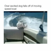 Poor boy: Over excited dog falls off of moving  speed boat Poor boy