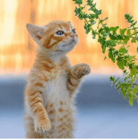 Over this Winter already, hustle up and get here Spring!! 😽🌿 -- 📷 @lol.funny.cats: Over this Winter already, hustle up and get here Spring!! 😽🌿 -- 📷 @lol.funny.cats
