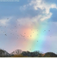 England, Memes, and Birds: Owen Humphreys/Press Association via AP Images Birds fly through a small rainbow in Whitley Bay, England.