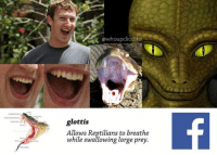 Reptilian: owhoupclicclike  glottis  Allows Reptilians to breathe  while swallowing large prey