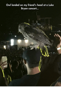 lolzandtrollz:Did He Make It Into Hogwarts Or What?: Owl landed on my friend's head at a Luke  Bryan concert... lolzandtrollz:Did He Make It Into Hogwarts Or What?